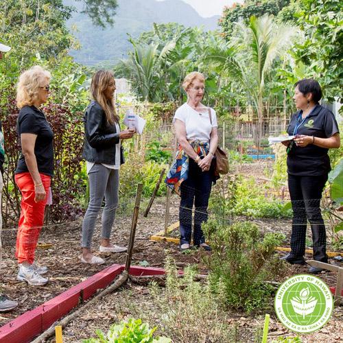 link to Windward CC alumni and ambassadors explore CNA garden